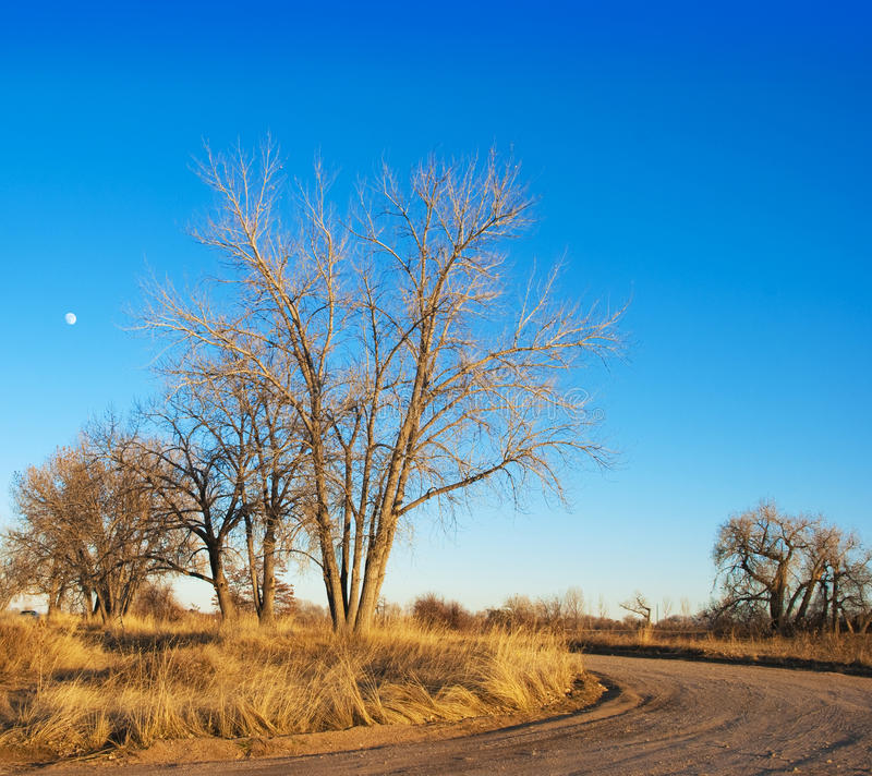 Late Afternoon Bare Tree and Moon