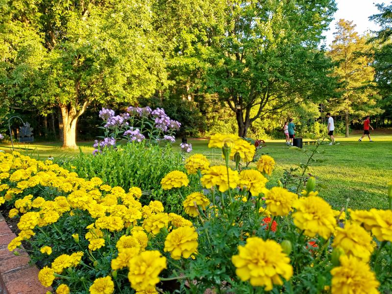 Residential Back Yard, With Flower Beds, Trees, and Lawn stock photo