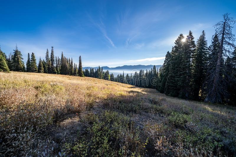 Late afternoon sunshine in a meadow in Wyoming`s Bridger Teton National Forest. Fog and haze lingers in mountains below from nearby wildfire royalty free stock photography