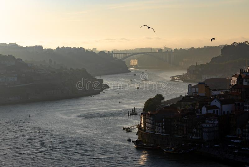 Late afternoon view of Douro River in Porto. A late afternoon view of the Douro River in Porto, with seagulls flying by royalty free stock photos