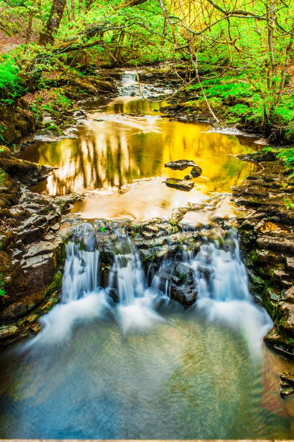 Late Afternoon Waterfall through lush green forest stock images