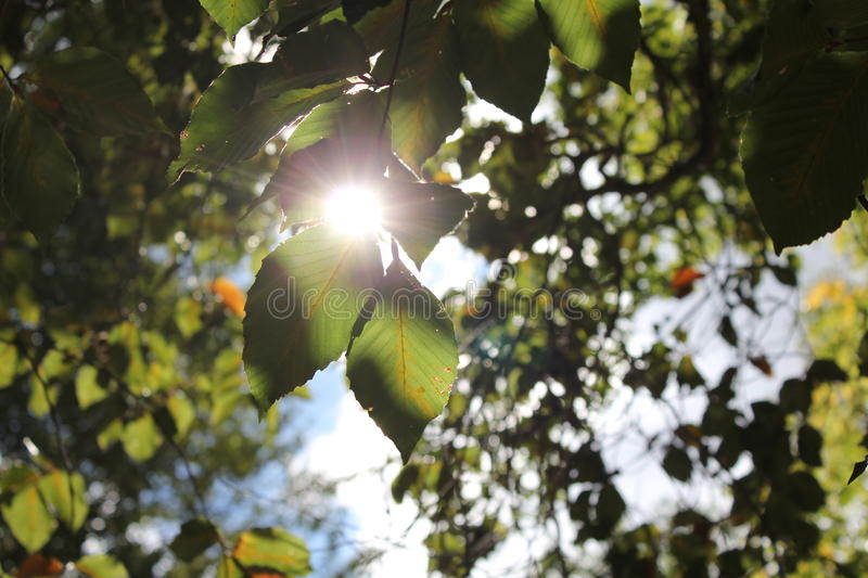 Download Late August Day stock photo. Image of light, blue, leaves - 45068598