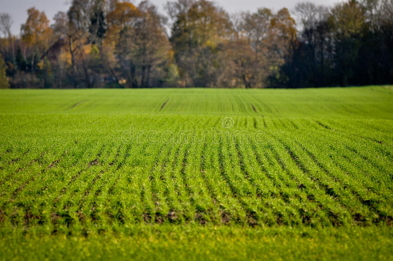 Download Late autum landscape stock image. Image of blue, farm - 22755311