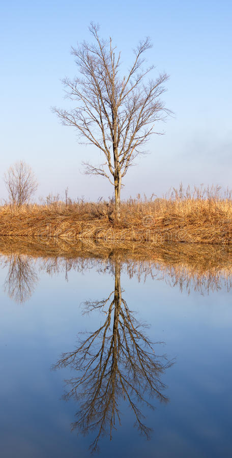 In the late autumn on bank of wood river royalty free stock image