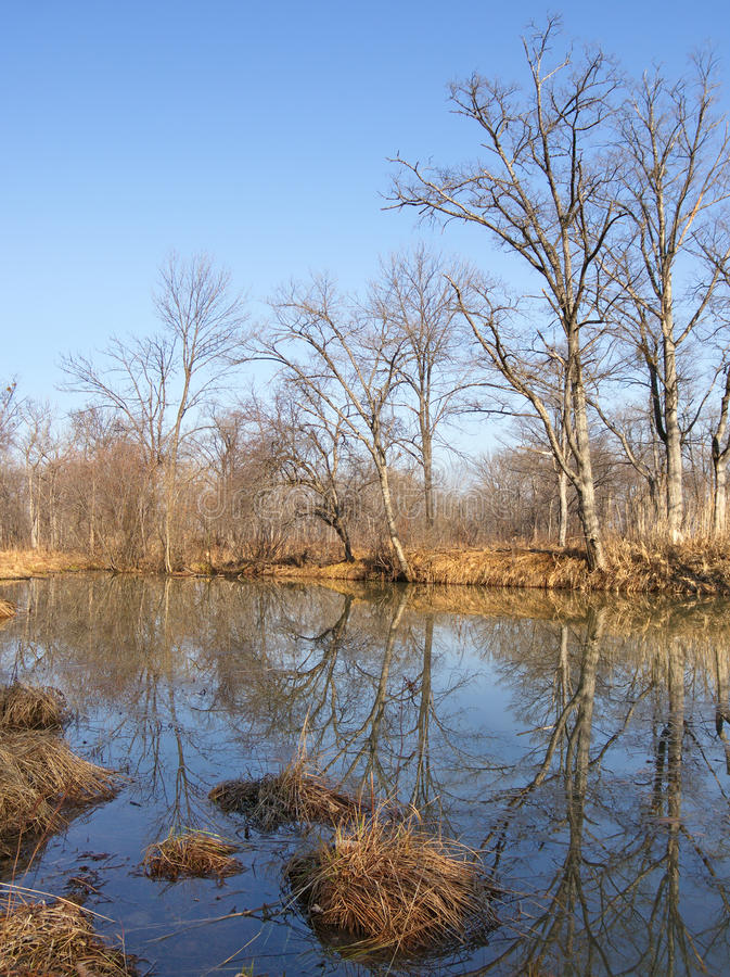 In the late autumn on bank of wood river stock photo