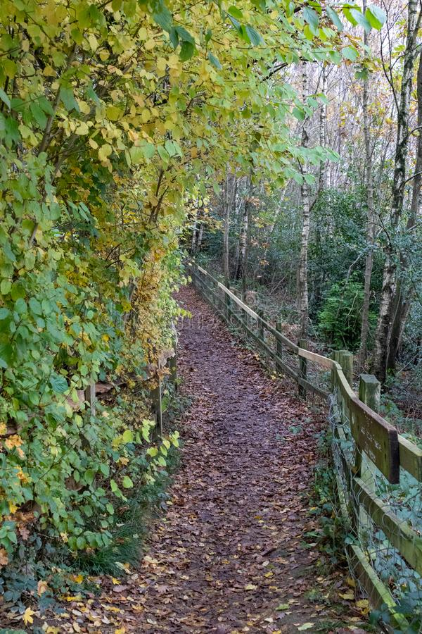 A late autumn day in Buchan Park Crawley United Kingdom. A walk in Buchan Park Crawley England on a cold day in November royalty free stock image