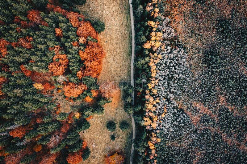 Late autumn forest aerial view near Saint Anna Lake, Transylvania, Romania. Aerial photography shot using a high resolution drone stock images