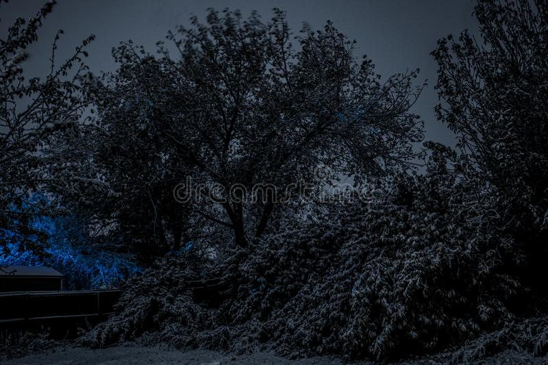 Late autumn landscape. Mystical atmospheric night scene, leaves are still on the trees, fresh snow, and blue light royalty free stock photography