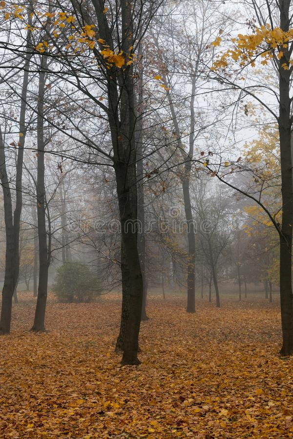 Late autumn in the park. Foggy weather cloudy weather, foliage dropped from trees royalty free stock image