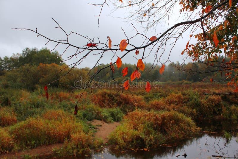 Late autumn, Russia stock photo