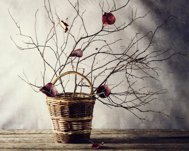 Late autumn still life, ikebana: entangled in the bare branches fallen red leaves in a basket royalty free stock photography