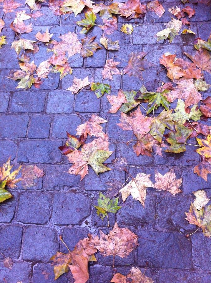 Late fall stock image