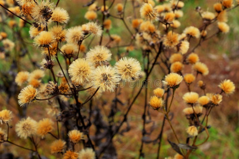 Late Fall Meadow Flowers stock photo