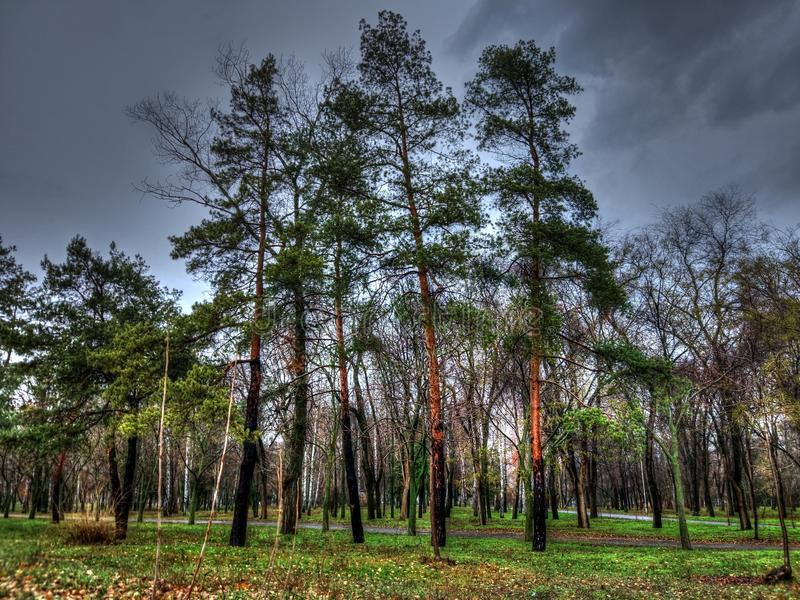 Late fall in the park. Walk in the park before the rain. late fall in the park stock image
