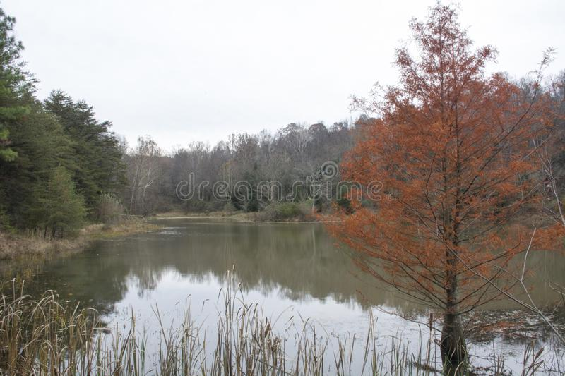 Late fall pond scene. A small pond in the late fall with hemlock trees, needles turning brown, and bare trees surrounding the water stock image