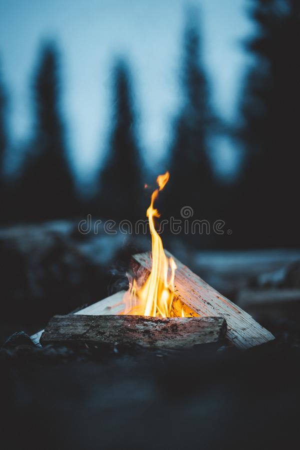 Late night fire. In the forest stock photography