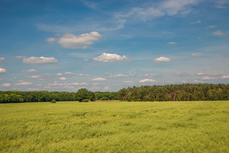 Late Spring, Early Summer landscape of ceral field in Germany. Late Spring, Early Summer landscape of cereal field in Germany, 2014 royalty free stock image