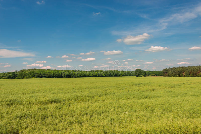 Late Spring, Early Summer landscape of ceral field in Germany. Late Spring, Early Summer landscape of cereal field in Germany, 2014 stock photo