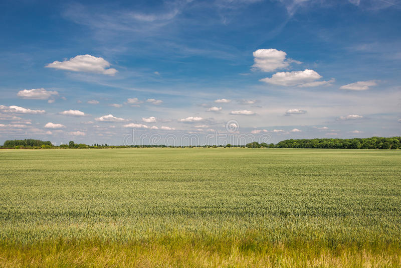 Late Spring, Early Summer landscape of ceral field in Germany. Late Spring, Early Summer landscape of cereal field in Germany, 2014 stock images