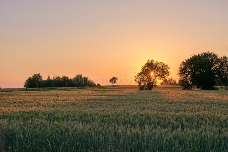 Late spring sunset with cereal field in foreground royalty free stock photography