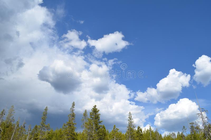 Late Spring in Wyoming: Deep Blue Cloud-filled Sky Over the Woods stock photos