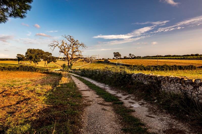 Countryside landscape, Puglia, Italy. Late summer afternoon countryside landscape with gravel road, dry dead walnut tree, Puglia, Southern Italy near the town of stock photo