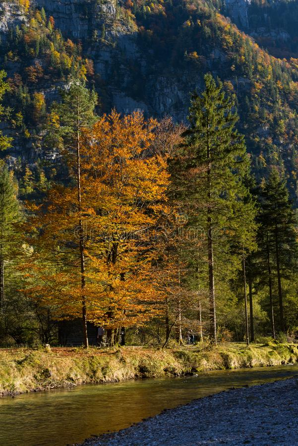 Late summer autumn nice colors nature stock image
