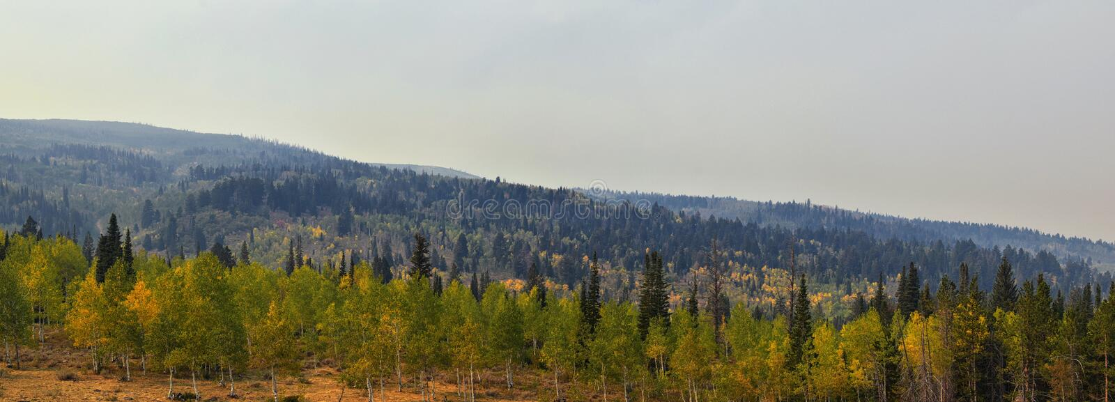 Late Summer early Fall panorama forest views hiking, biking, horseback trails through trees along Highway 40 near Daniels Summit b. Etween Heber and Duchesne in royalty free stock photo