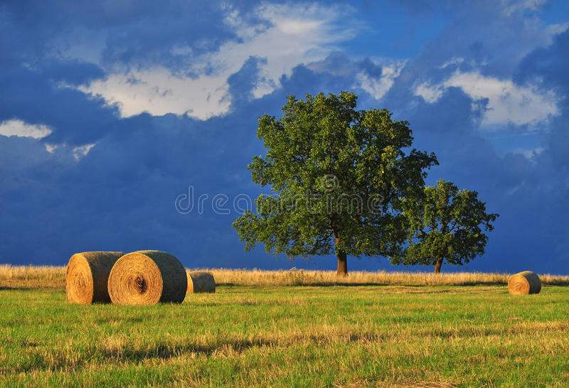 Late summer landscape. Oak tree and stormy clouds, nature stock photography