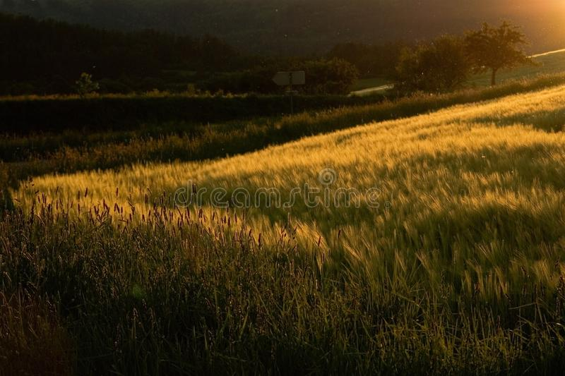 Download Late summer mood stock image. Image of nature, summer - 17887603