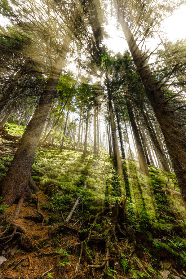 Free Late Summer Sunlight Breaking Through The Trees At A Mystical Lane Stock Photography - 61571732