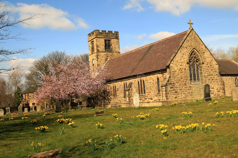 Late 17th century church. Showing headstones and groups of yellow daffodils scattered round the church, the clock tower with red cherry blossom tree under blue stock image