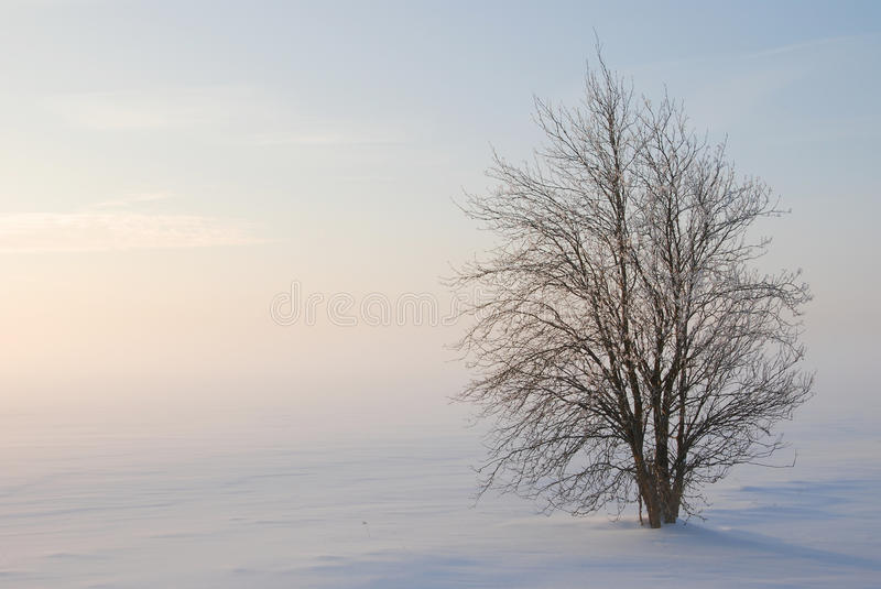 Winter still-life. Late winter afternoon on a meadow, -32 degrees Celsius stock image