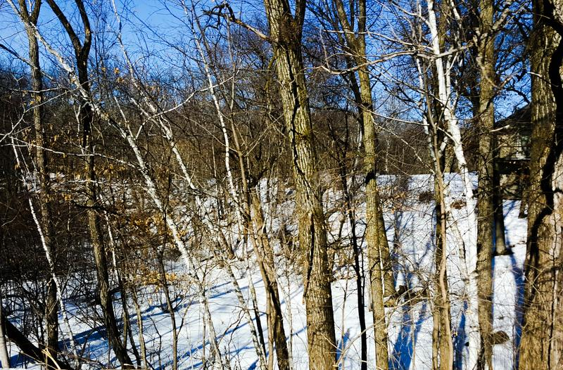 Late Winter Woods royalty free stock image