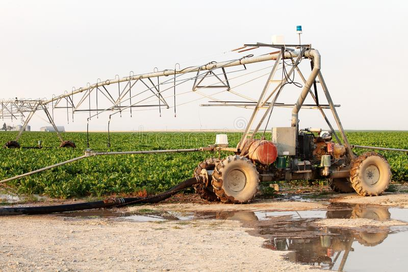 Lateral farm irrigation system in a field of sugar beets. stock photo