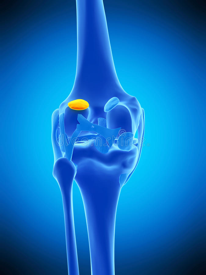 The lateral gastrocnemius bursa. Medically accurate illustration of the lateral gastrocnemius bursa royalty free illustration