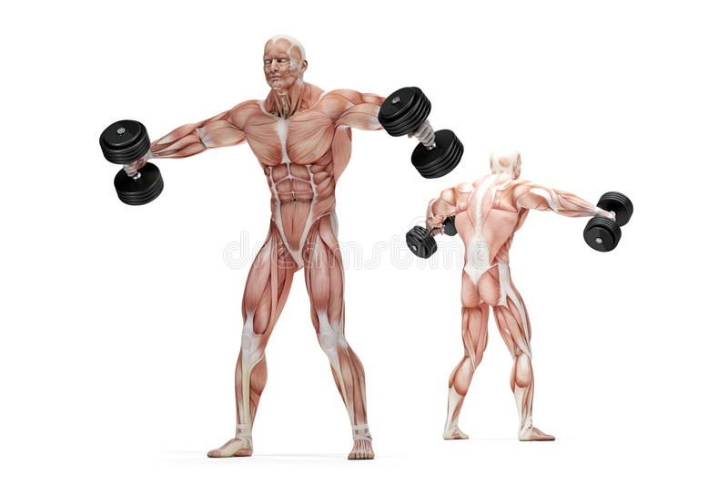 A lateral levanta o exercício dos ombros Ilustração anatômica Isolado Trajeto de grampeamento ilustração royalty free