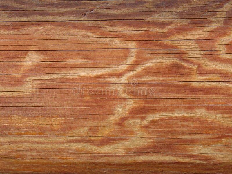 Lateral powierzchnia suche bele bez barkentyny zdjęcie royalty free