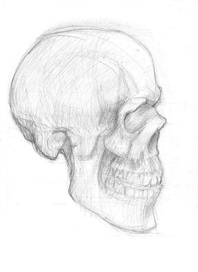 Lateral skull sketch royalty free illustration