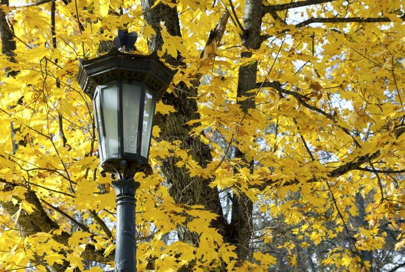 Laterne gegen Hintergrund von gelben Ahornblättern lizenzfreie stockbilder