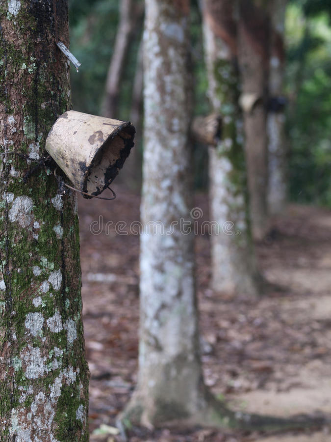 Latex Forest Stock Photography