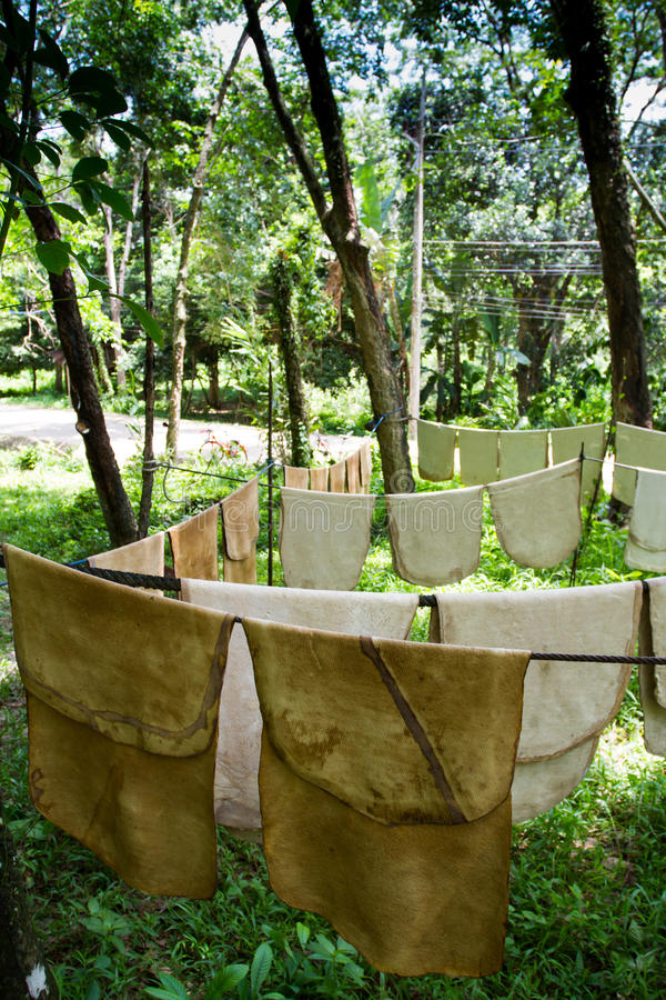 Latex of rubber tree drying on the washing line royalty free stock photography