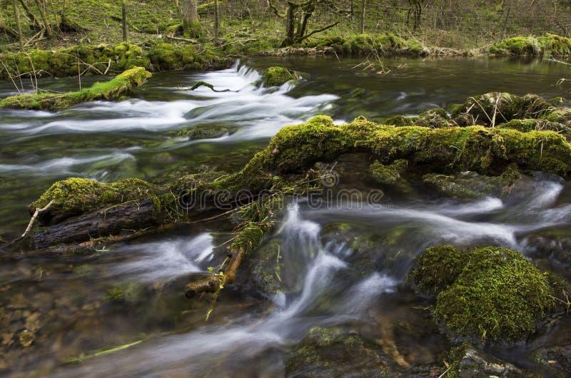 Lathkill flod med mossiga stenblock och filialer arkivbilder