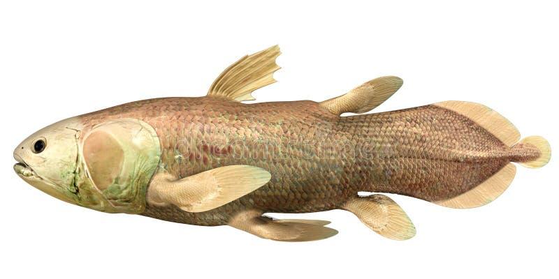 Latimeria Chalumnae (coelacanth) stock illustrationer