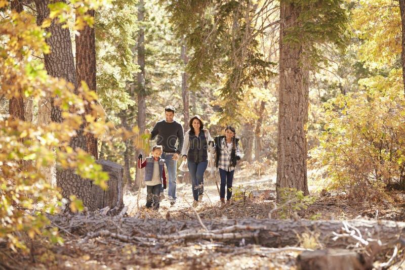 Latinamerikansk familj av fyra som tillsammans går i en skog arkivbild