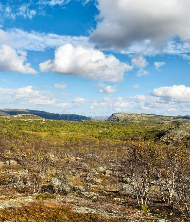 The latitude of the tundra in all its glory on a summer sunny day, early autumn in the north of Russia. Tundra vegetation in general in the North of Russia on a stock photos