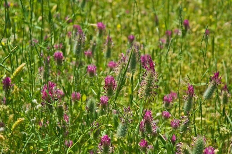 Download Lato łąka zdjęcie stock. Obraz złożonej z kwiat, rośliny - 28965134