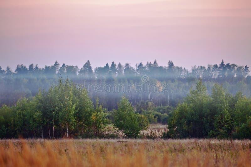lato śródpolny mgłowy zmierzch zdjęcie royalty free