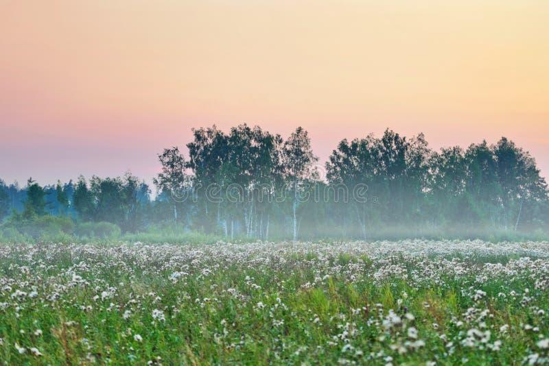 lato śródpolny mgłowy zmierzch fotografia stock