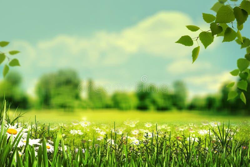 Lato, abstrakcjonistyczni naturalni tła z lato łąką, gra zdjęcie royalty free